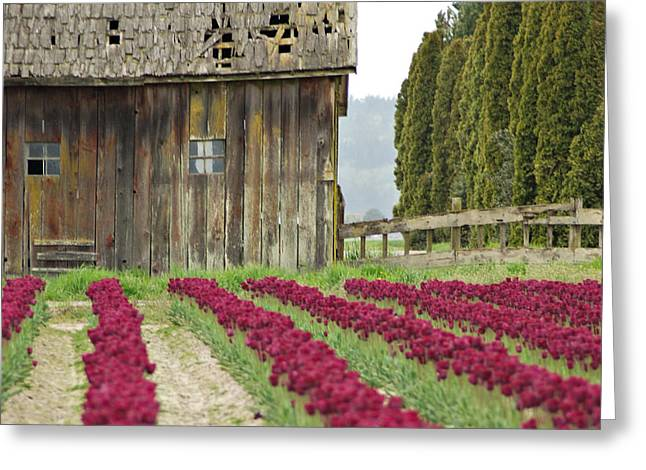 Skagit Valley Greeting Card by Kjirsten Collier