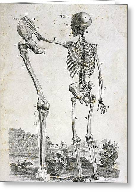 Skeleton And Giant's Leg Greeting Card by British Library