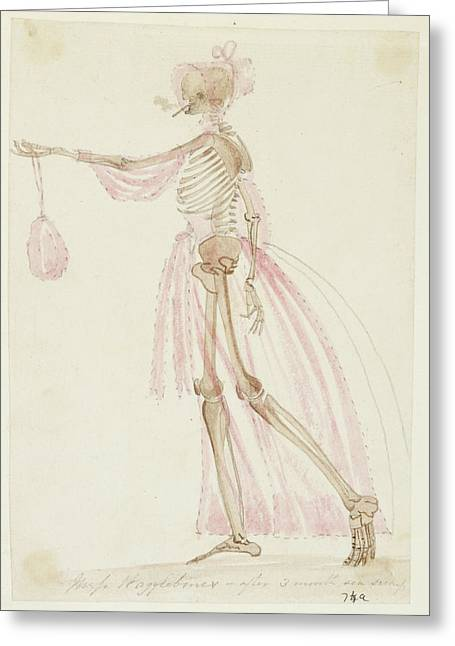 Skeleton In Pink Dress Greeting Card by British Library