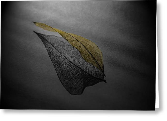 Skeleton Leaf 4716 Greeting Card