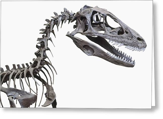 Skeleton Of A Deinonychus Greeting Card by Dorling Kindersley/uig