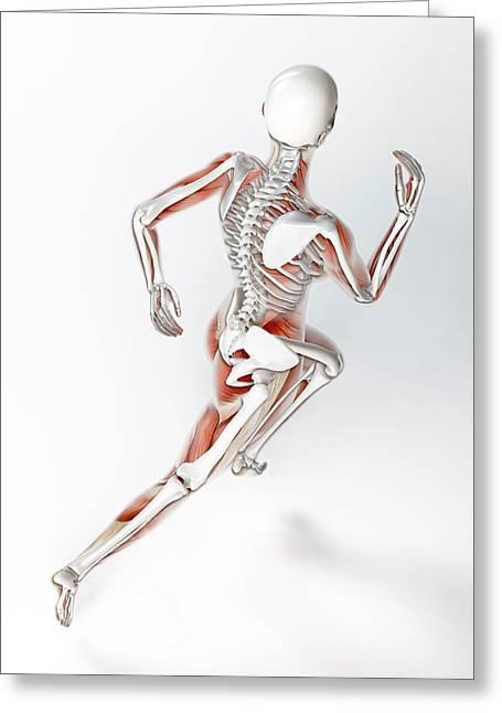 Skeleton Of Runner Greeting Card by Andrzej Wojcicki