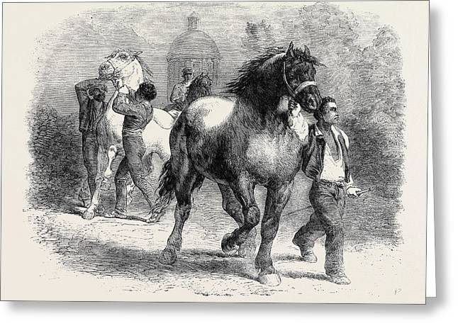 Sketch From The Horse Fair Greeting Card