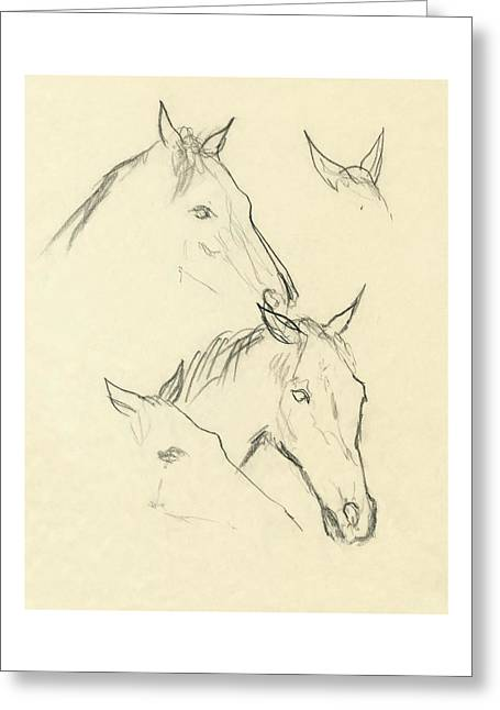 Sketch Of A Horse Head Greeting Card