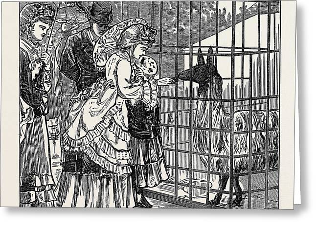Sketches In The International Exhibition The Llama 1871 Greeting Card by English School