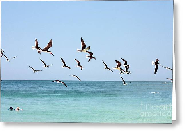 Skimmers And Swimmers Greeting Card by Carol Groenen