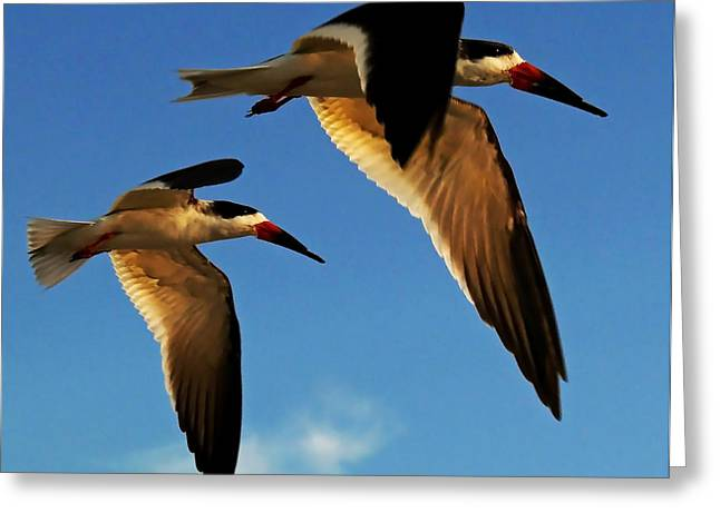 Skimmers Greeting Card by Stuart Harrison