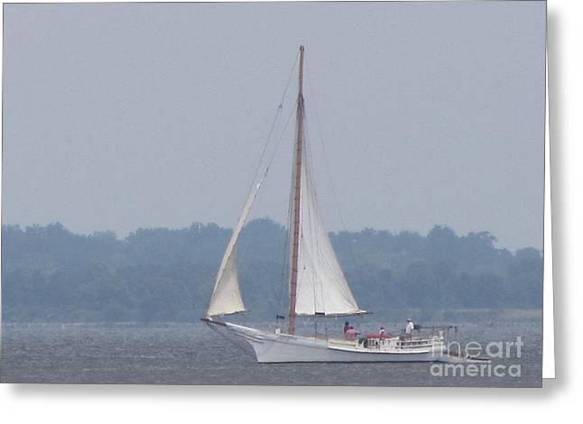 Skipjack On The Bay  Greeting Card by Debbie Nester