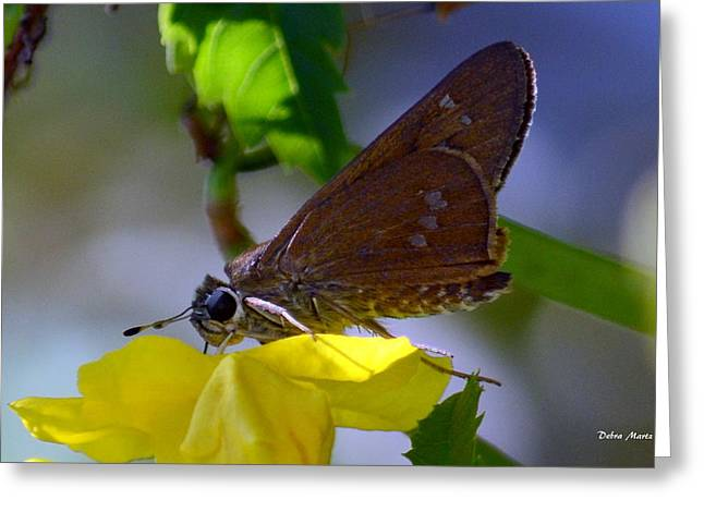 Greeting Card featuring the photograph Skipper Butterfly by Debra Martz