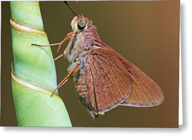 Skipper Butterful Greeting Card by Dart and Suze Humeston