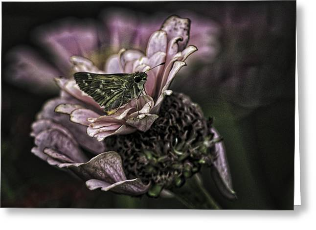 Skipper On Flower Greeting Card