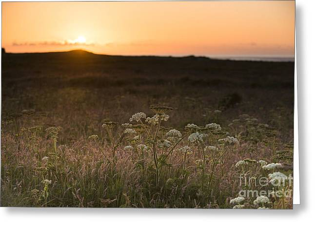 Skokhom Hogweed Sunset  Greeting Card by Anne Gilbert