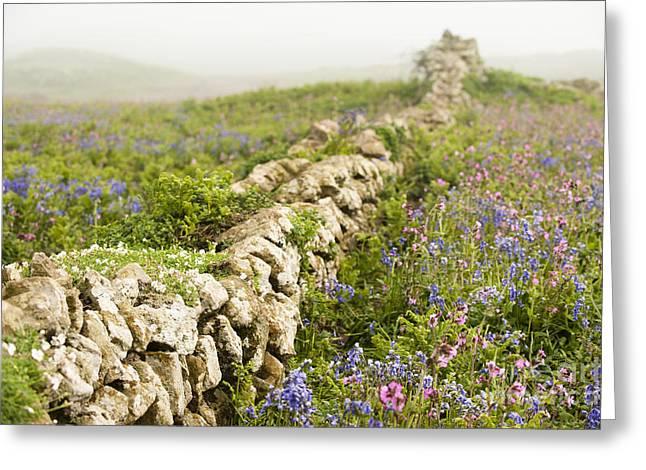 Skomer Wildflowers Greeting Card by Anne Gilbert