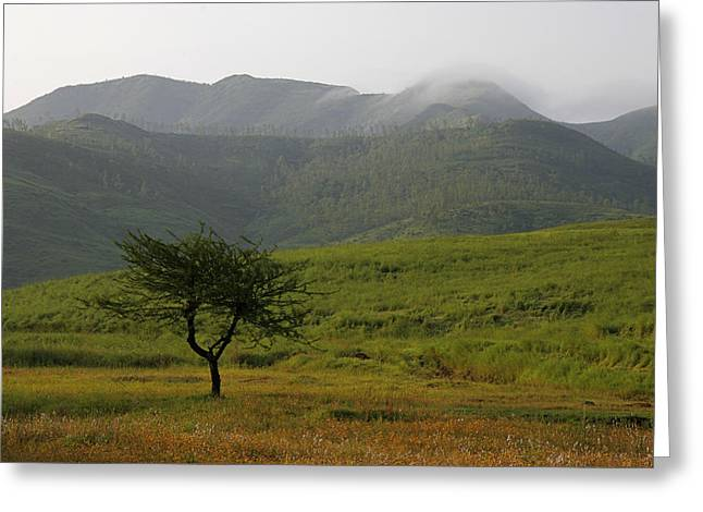Greeting Card featuring the photograph Skc 0053 A Solitary Tree by Sunil Kapadia
