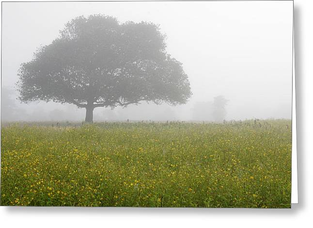 Greeting Card featuring the photograph Skc 0056 Tree In Fog by Sunil Kapadia