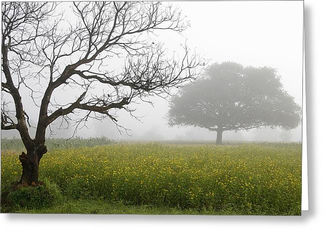 Greeting Card featuring the photograph Skc 0058 Contrasty Trees by Sunil Kapadia