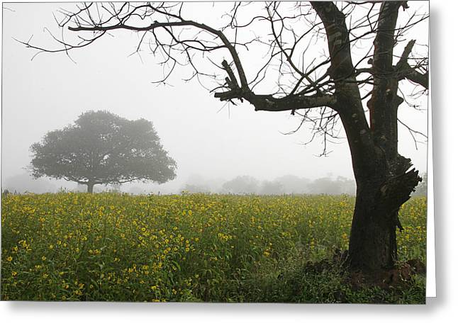 Greeting Card featuring the photograph Skc 0060 Framed Tree by Sunil Kapadia