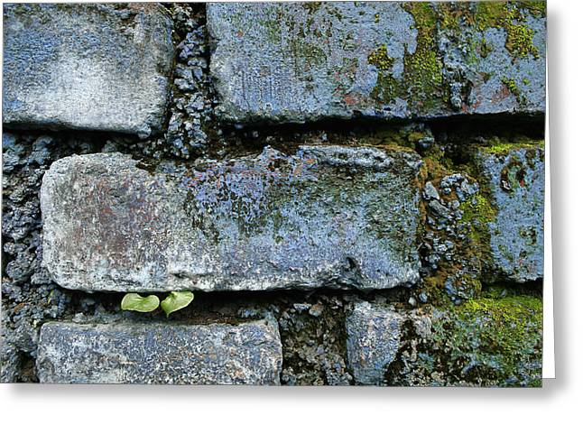 Greeting Card featuring the photograph Skc 0301 Tiny Twin Leaves by Sunil Kapadia