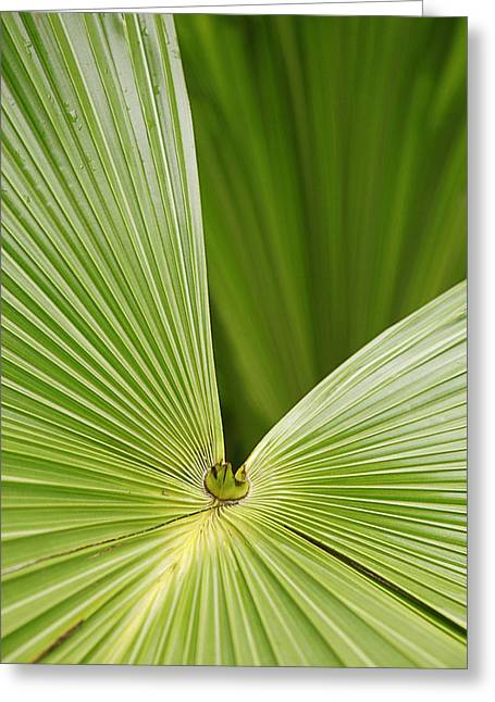 Greeting Card featuring the photograph Skc 0691 The Paths Of Palm Meeting At A Point by Sunil Kapadia