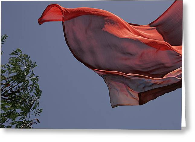 Greeting Card featuring the photograph Skc 0958 The Flying Saree by Sunil Kapadia