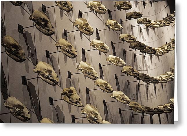 Skull Wall Greeting Card by Garry Gay
