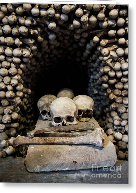 Skulls Greeting Card by Jaroslaw Blaminsky