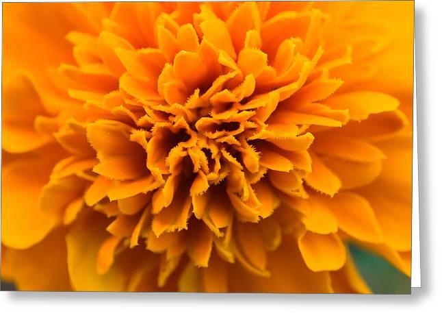 Skunk Flower Orange Greeting Card