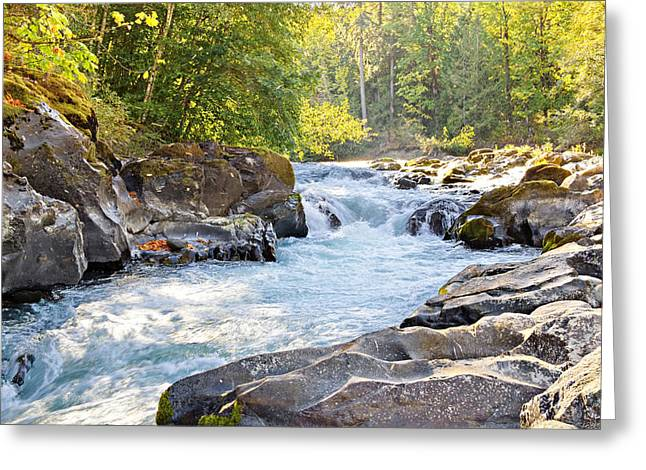 Skutz Falls At Cowichan River Provincial Park Greeting Card