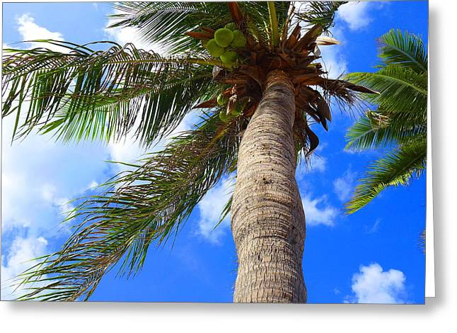 Sky And The Coconut Tree Greeting Card