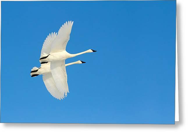 Sky Ballet Greeting Card