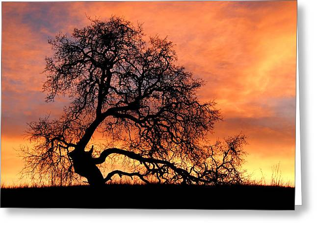 Greeting Card featuring the photograph Sky On Fire by Priya Ghose