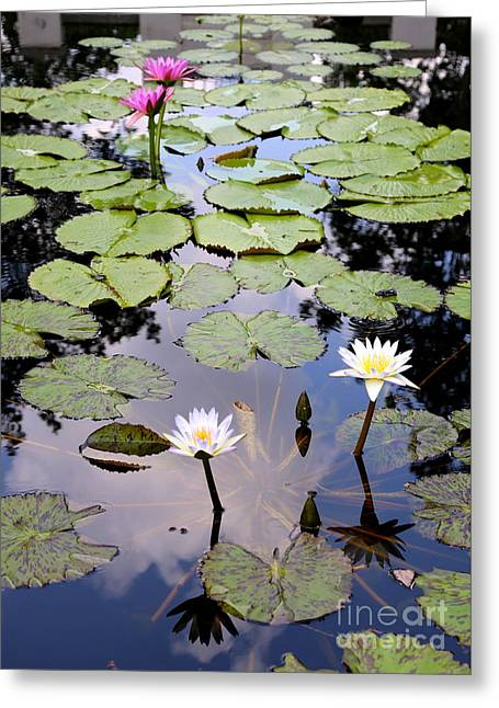 Sky Reflected On Lily Pond Greeting Card