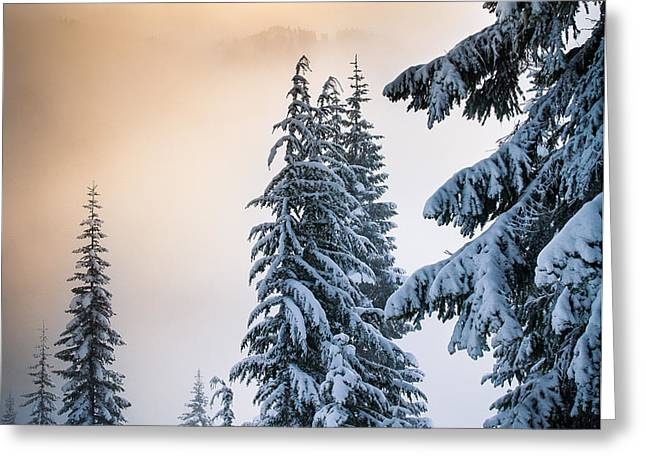 Skyline Lake Forest - January Greeting Card by Inge Johnsson
