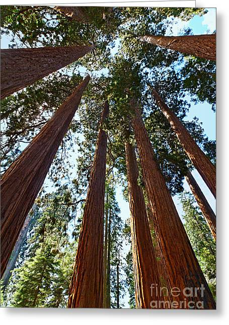 Skyscrapers - A Grove Of Giant Sequoia Trees In Sequoia National Park In California Greeting Card by Jamie Pham