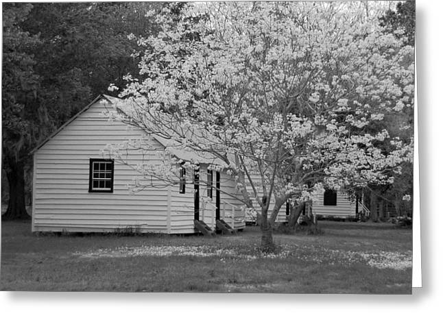 Slave Cabins In Black And White Greeting Card by Suzanne Gaff