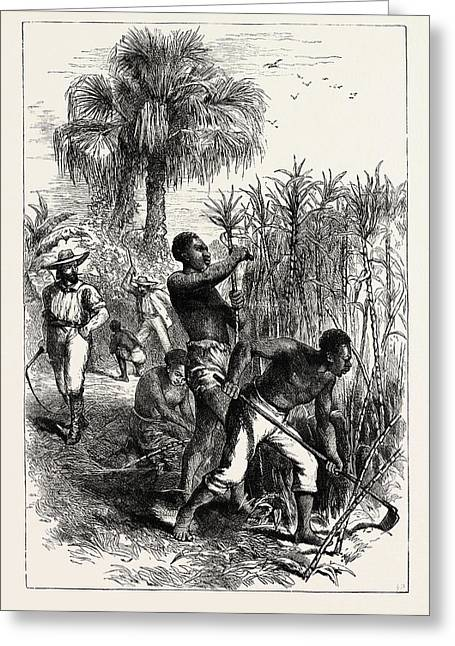 Slaves Working On A Plantation, United States Of America Greeting Card by American School