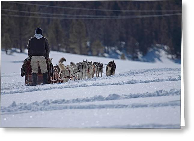 Sled Dog  Greeting Card by Duncan Selby