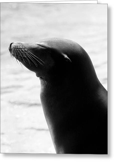 Sleek Sunbather In Black And White Greeting Card by Angela Rath