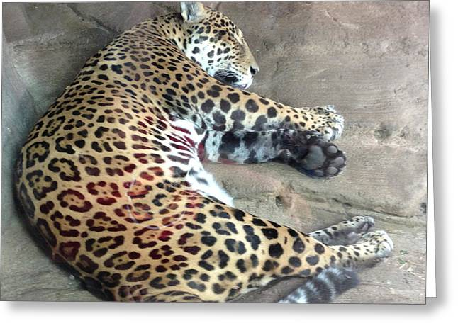 Sleep Time Jaguar Greeting Card by Gary Govett
