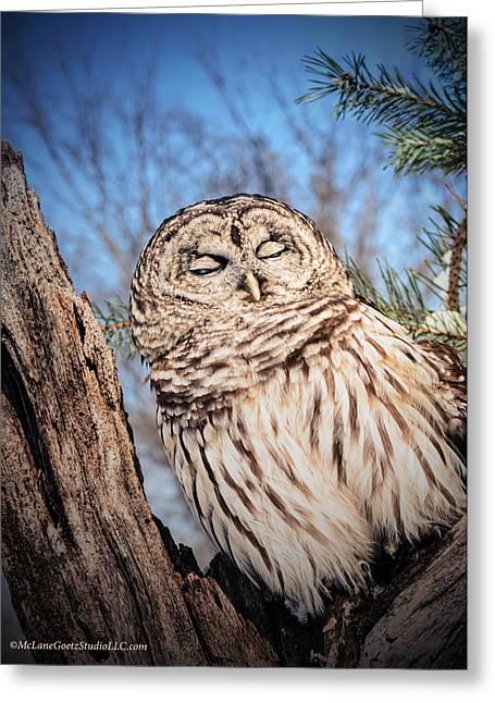 Sleeping Barred Owl  Greeting Card