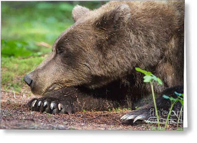 Sleeping Bear Greeting Card