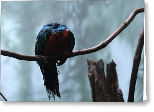 Sleeping Blue Bird Greeting Card