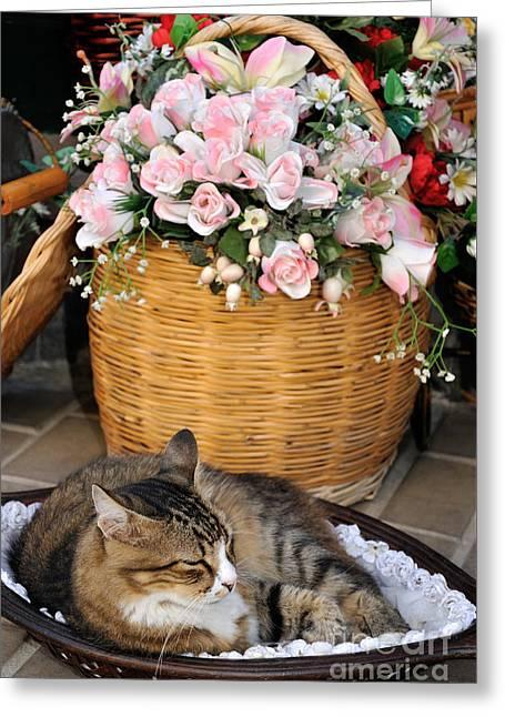 Sleeping Cat At Flower Shop Greeting Card