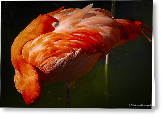 Greeting Card featuring the photograph Sleeping Flamingo by Phil Abrams