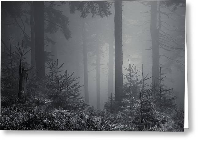 Sleeping Forest   Greeting Card by Jaromir Hron