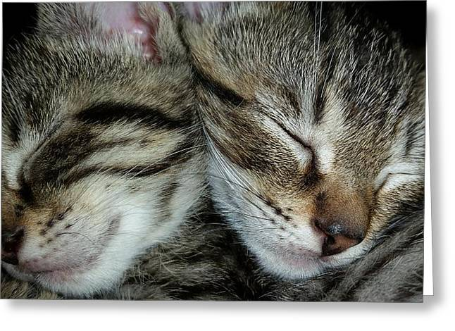 Sleeping Kittens Greeting Card