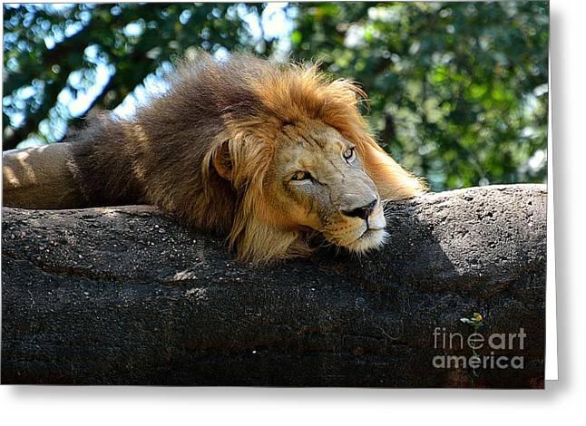 Thinking Lion Greeting Card by Lisa L Silva