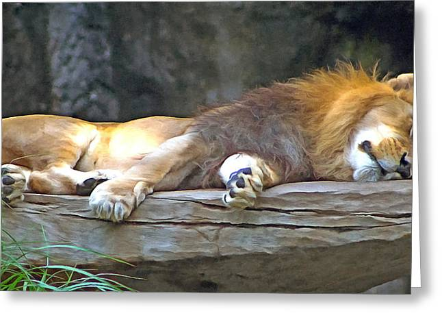 Sleeping Lion Greeting Card