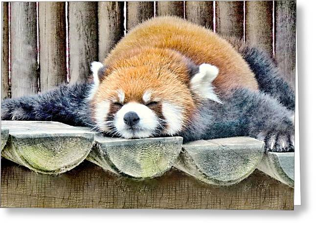 Sleeping Red Panda Bear Greeting Card