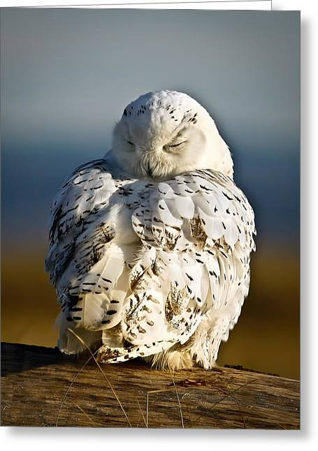 Sleeping Snowy Owl Greeting Card by Steve McKinzie
